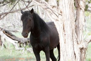 Feral Horse, Mesa Verde National Park, Colorado